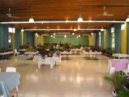 2012 Annual Begonia Show at Mt Coot-tha Botanic Gardens Auditorium
