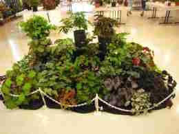 Artistic Static Display of Begonias - back view