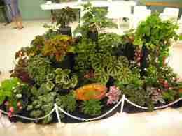 Artistic Static Display of Begonias - front view
