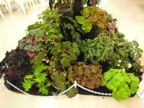 Artistic Static Display of Begonias - left side view