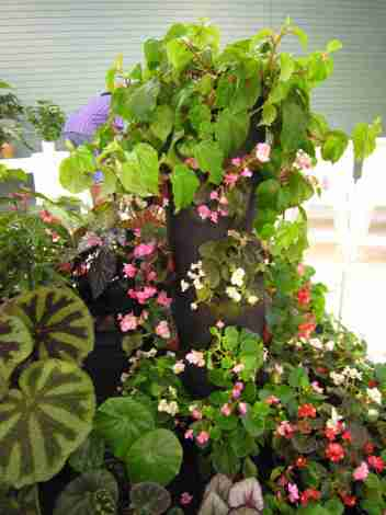 Artistic Static Display of Begonias - right front view