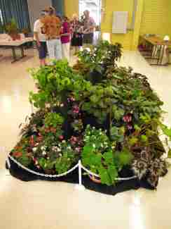 Artistic Static Display of Begonias - right side view