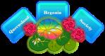 Queensland Begonia Society Logo