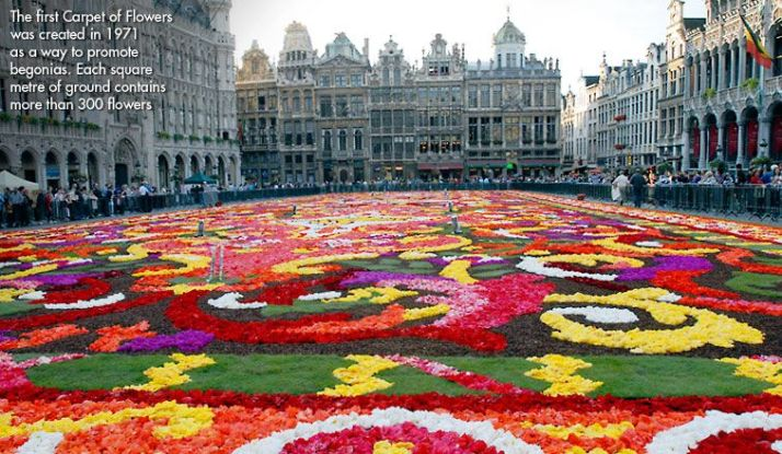 Brussels Biennial Flower Carpet: Blooming Begonia Art