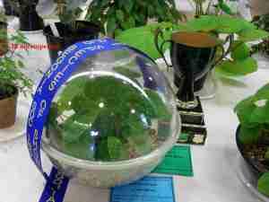 Elsie Paton Trophy 2013-65